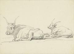 Twee liggende koeien met lange horens