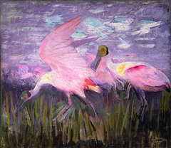 Roseate Spoonbills, study for book Concealing Coloration in the Animal Kingdom